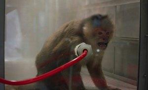 Escándalo #Monkeygate: la bola de nieve se sigue haciendo más grande